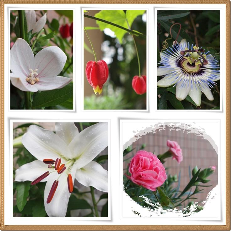 flower0703-1.jpg