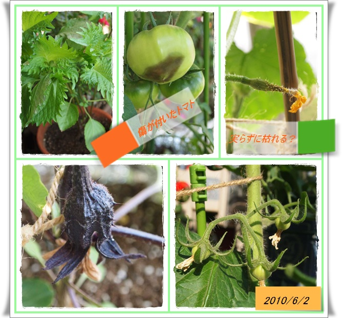 vegetable0602.jpg