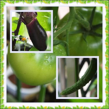 vegetable0623.jpg