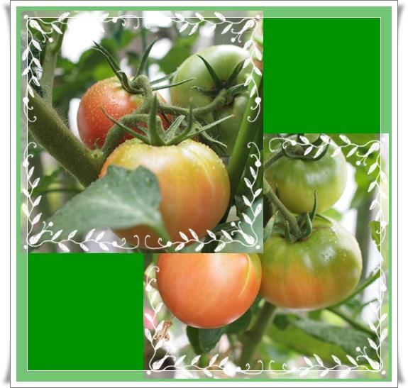 vegetable0703.jpg