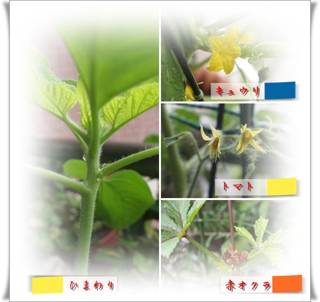 vegetable0812.jpg