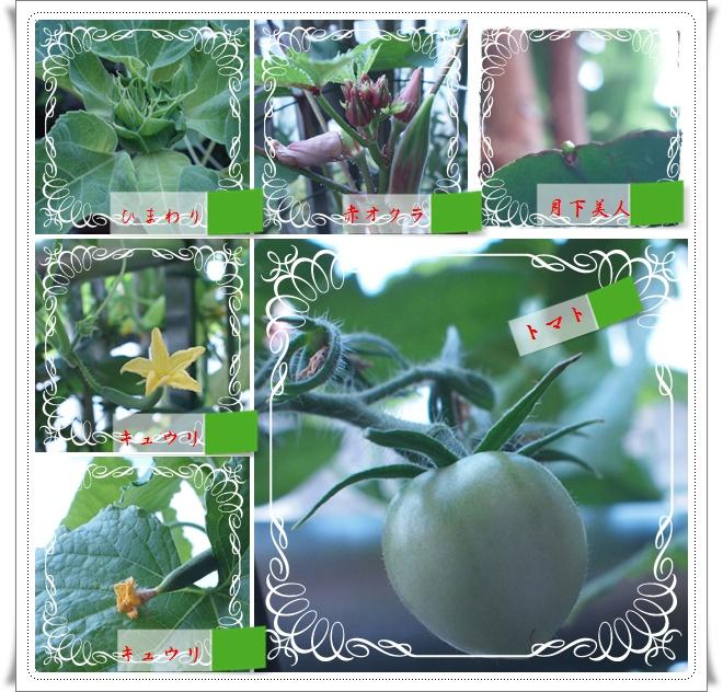 vegetable0825.jpg