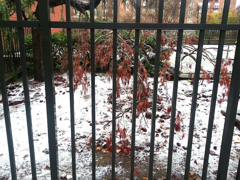 snowinfrontofapt.jpg