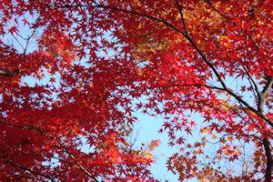 2010_1130_085紅葉と青空