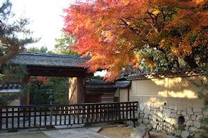 2010_1129高桐院-DSC01867