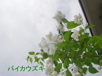 P5110208.jpg