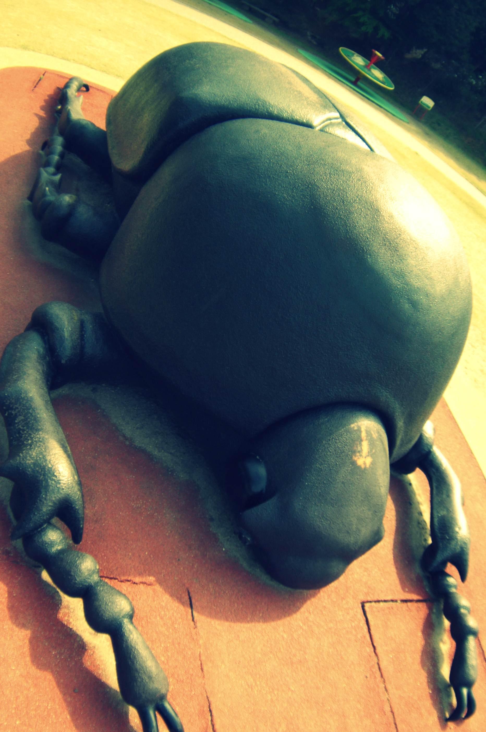 カブトムシ 雌