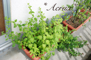 201008_herb04.jpg