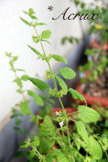 201008_herb05.jpg