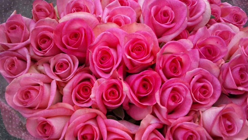 20121112_rose_mag