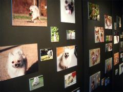 犬の写真展 004