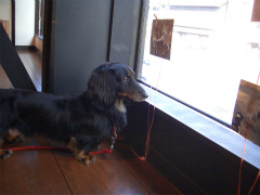 犬の写真展 003