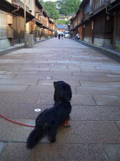 犬の写真展 010