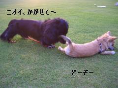 松任CCZ 039