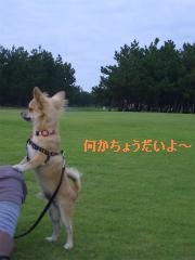 松任CCZ 029