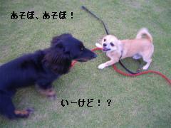 松任CCZ 035