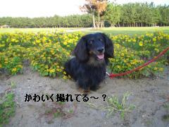 松任CCZ 020
