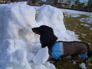 雪解け 002