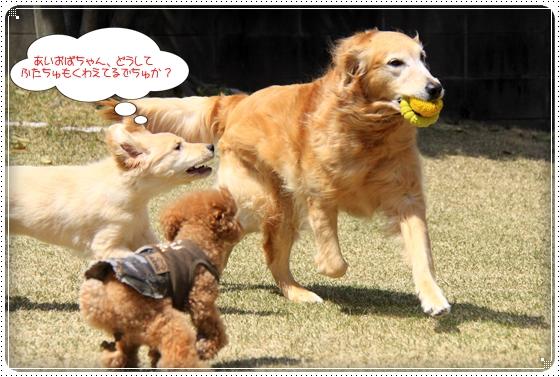 2012,4,10お庭遊び5