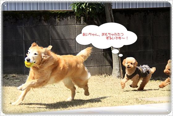 2012,4,10お庭遊び4