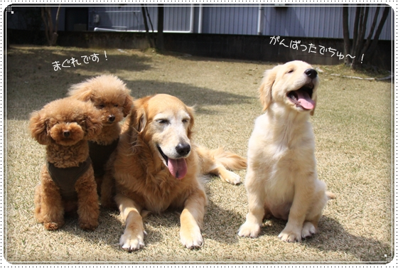 2012,4,10お庭遊び12