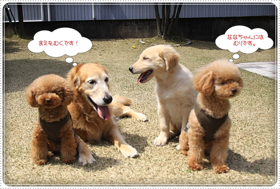 2012,4,10お庭遊び10
