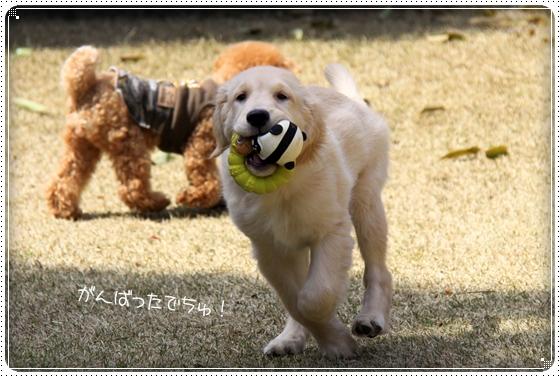 2012,4,10お庭遊び9