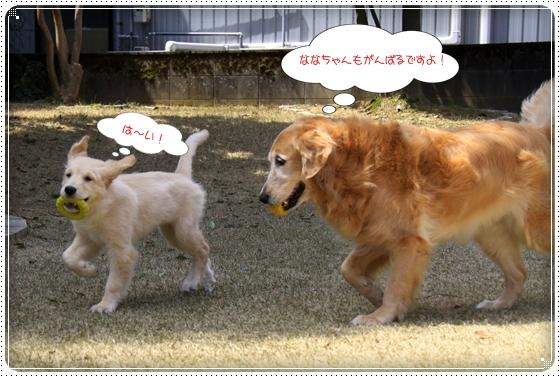 2012,4,10お庭遊び7