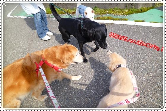 2012,4,12お散歩6