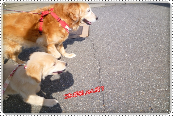 2012,4,12お散歩3