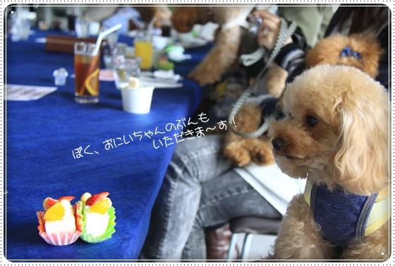 2012,4,16わんわん倶楽部オフ会10