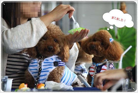2012,4,16わんわん倶楽部オフ会8