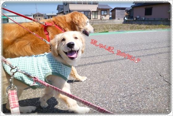 2012,4,18お散歩3