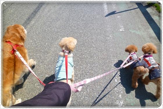 2012,4,18お散歩2