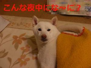 049_20130101212500.jpg