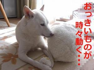058_20121226203300.jpg