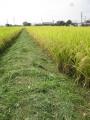 H26.10.3稲刈り前の畦の草刈り@IMG_3222
