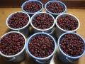 H26.10.26ピンク花ローゼル収穫④@IMG_3445
