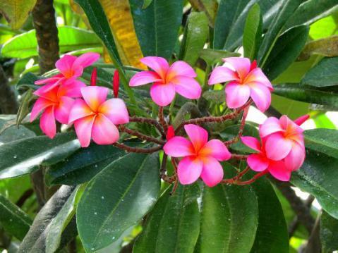 flower_20130228093907.jpg