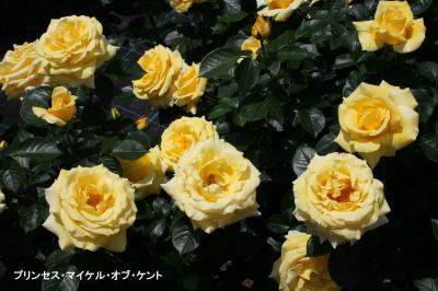 141_convert_20110522180222.jpg