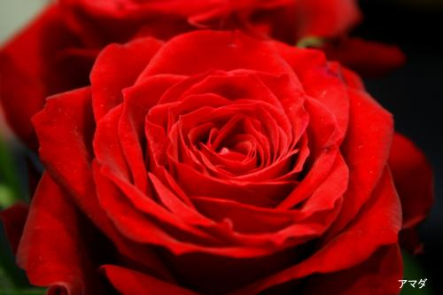 544_convert_20100329183038.jpg