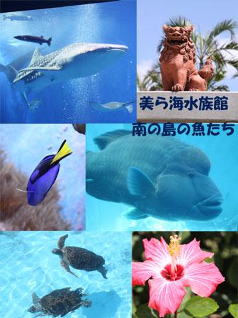 きれいな海!きれいな魚!