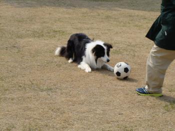 レオくんとボール
