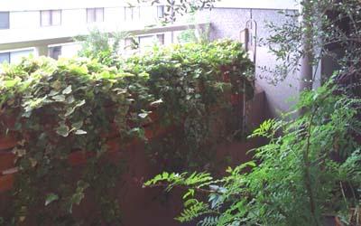 ベランダジャングル