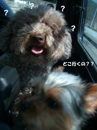 2010_0503_122827-CIMG429buro.jpg