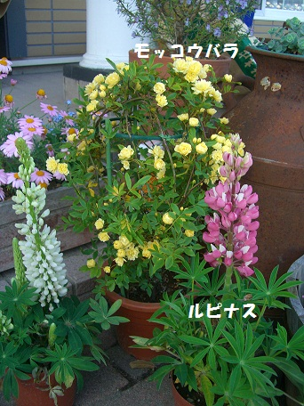 2010_0508_173100-CIMG4373buro.jpg