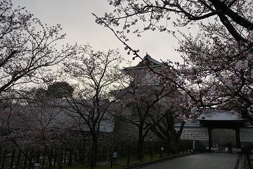0411ishikawamonsakura.jpg