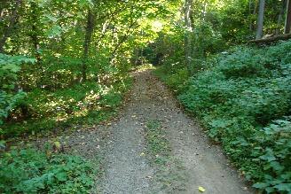 女神山の道