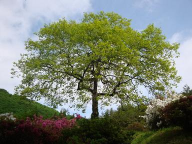 女神山近郊の木