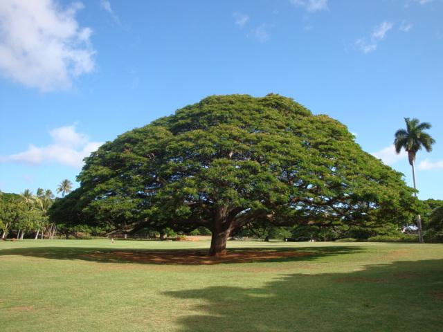 ハワイ02